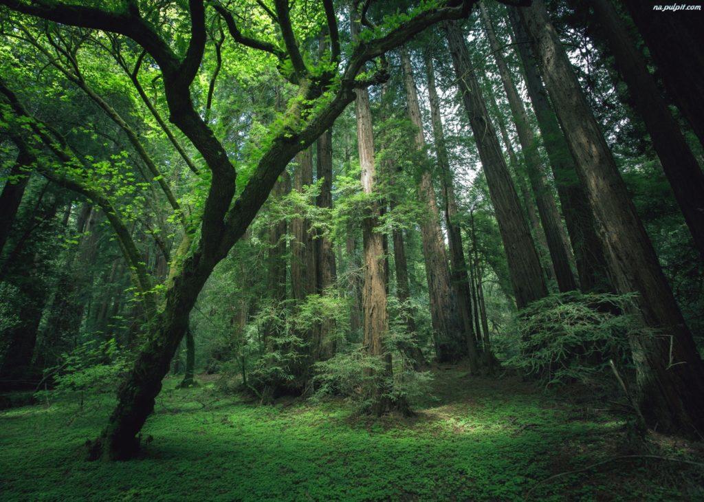 Las, który zainspirował powstanie umywalki ceramicznej Szarlin